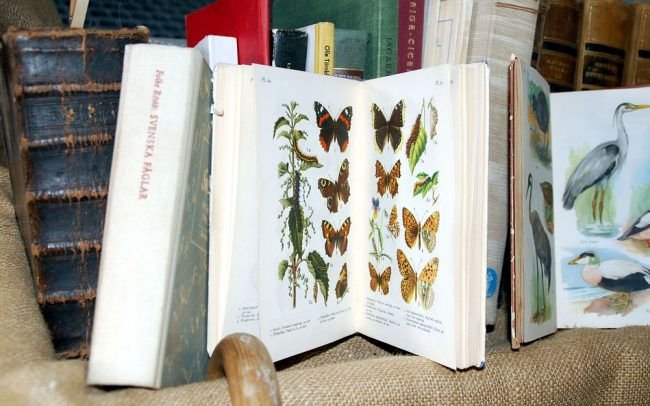 books about nature butterflies